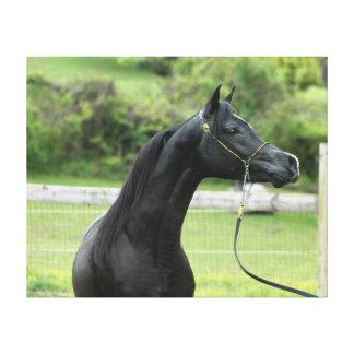 Black Arabian stallion wrapped canvas