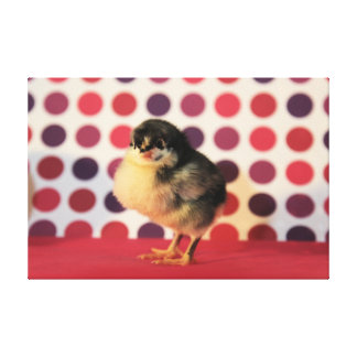 Black Astralorp Chick Canvas Print