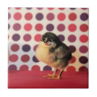 Black Astralorp Chick Tile