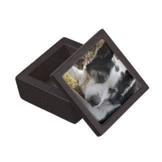 Black Australian Cattle Dog Small Gift Box Premium Trinket Box