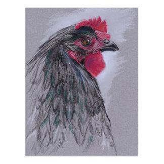 Black Australorp Hen Post Cards