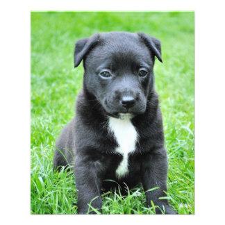 Black Baby Dog Flyer