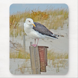 Black Backed Gull Seagull Series Mouse Pad