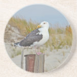 Black Backed Gull Shore Bird Drink Coasters