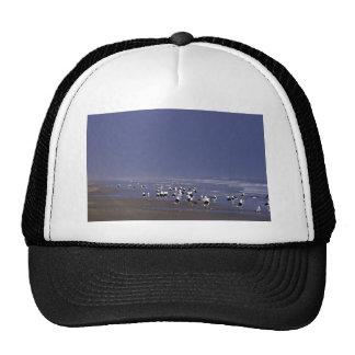 Black-backed gulls at shoreline mesh hats