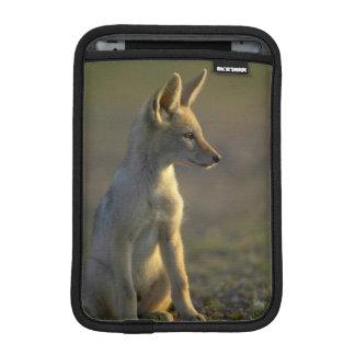 Black-Backed Jackal (Canis Mesomelas) Pup iPad Mini Sleeve