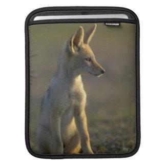 Black-Backed Jackal (Canis Mesomelas) Pup iPad Sleeve