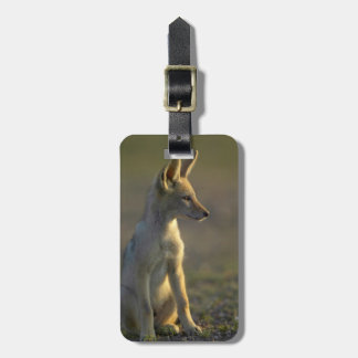 Black-Backed Jackal (Canis Mesomelas) Pup Luggage Tag