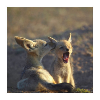 Black-Backed Jackal (Canis Mesomelas) Pups Canvas Print