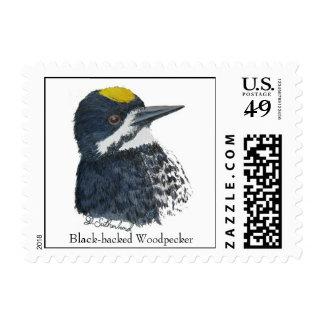 Black-backed Woodpecker Postage Stamp