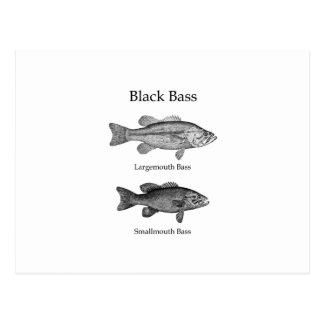 Black Bass (line art) Postcard
