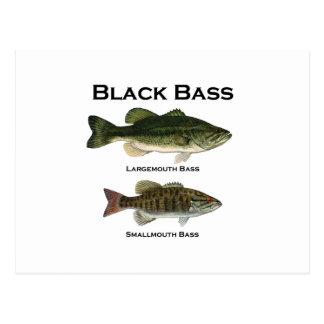 Black Bass Species (largemouth - smallmouth) Postcard