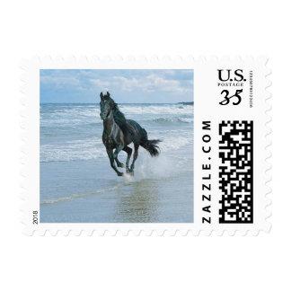 Black Beach Horse Postage