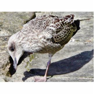 Black Beaked Sea Bird Animal Cut Outs