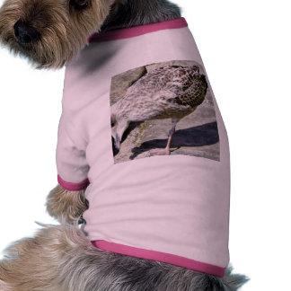 Black Beaked Sea Bird Animal Dog Clothing