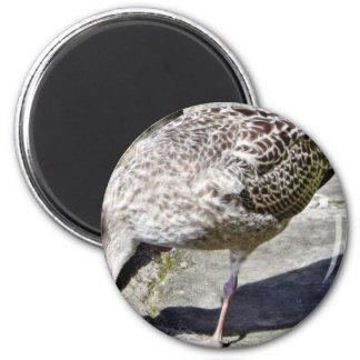 Black Beaked Sea Bird Animal Fridge Magnet