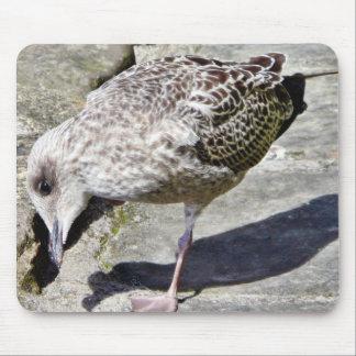 Black Beaked Sea Bird Animal Mouse Pad