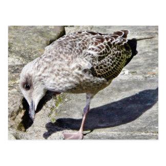 Black Beaked Sea Bird Animal Postcard