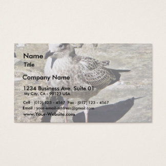 Black Beaked Sea Bird Business Card