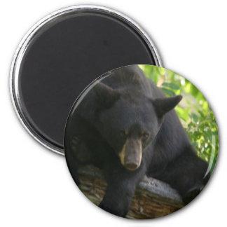 black bear 2 inch round magnet
