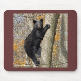 Black Bear at Shenandoah National Park Mouse Pad