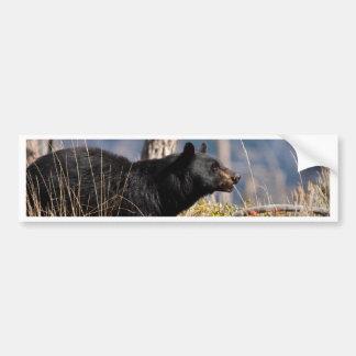 Black Bear Bumper Sticker