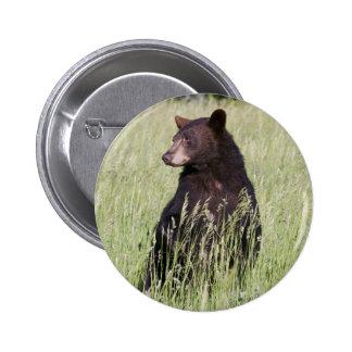 Black Bear Button