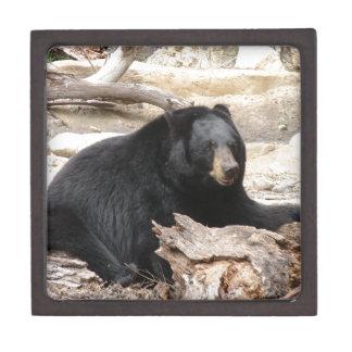 """Black Bear"" by Carter L. Shepard"" Jewelry Box"