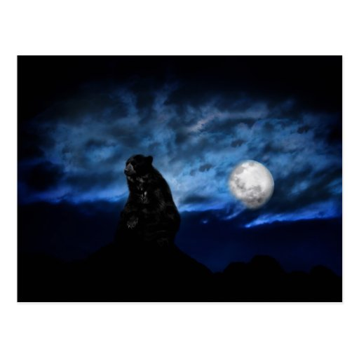 Black bear by moonlight postcard