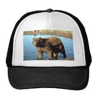 Black Bear by water Hat