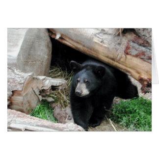 Black Bear Card