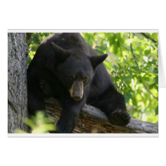 black bear cards