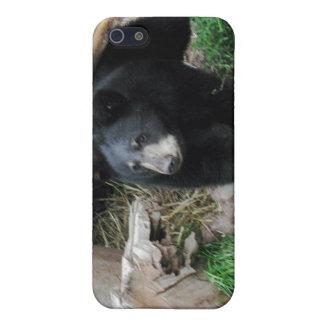 Black Bear Case For iPhone SE/5/5s