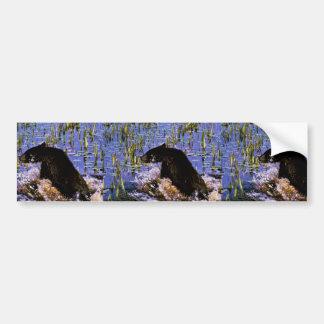 Black Bear Cub Car Bumper Sticker
