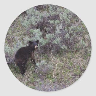 Black Bear Cub Classic Round Sticker