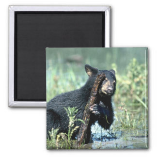 Black Bear-cub in summer marsh Magnet