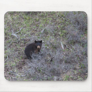 Black Bear Cub Mouse Pad