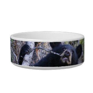 black bear cub cat water bowl