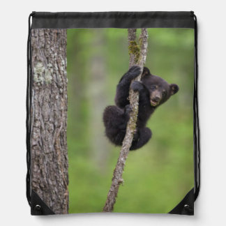 Black bear cub playing, Tennessee Drawstring Backpack