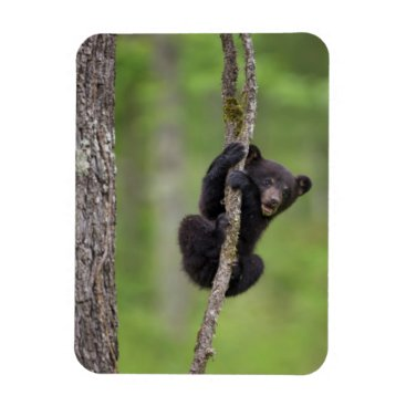 USA Themed Black bear cub playing, Tennessee Magnet