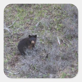 Black Bear Cub Square Sticker