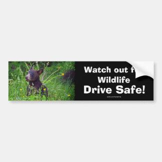 Black Bear Cub Wildlife Supporter Bumper Sticker Car Bumper Sticker