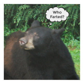 """Black Bear-""""Cubby Who Farted?"""" Wall Panel 12x12"""