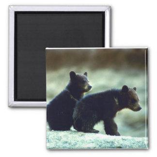 Black Bear cubs 2 Inch Square Magnet