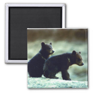 Black Bear cubs Magnet
