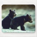 Black Bear cubs Mouse Pad