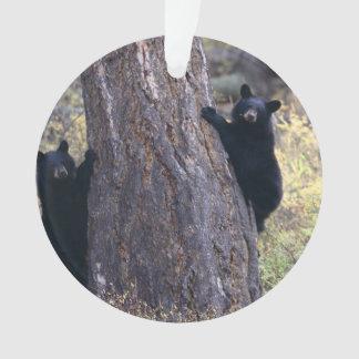 black bear cubs ornament