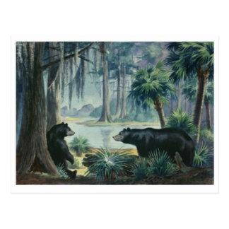 Black Bear Diorama Postcard
