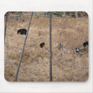 Black Bear Family Mouse Pad