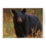 Black Bear Greeting Cards